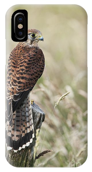 Kestrel IPhone Case