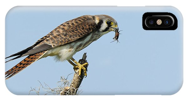 Kestrel With A Cricket IPhone Case