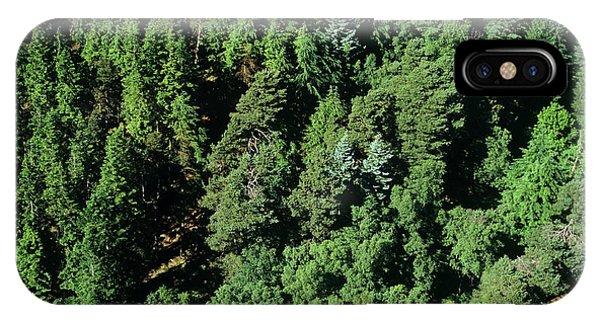 Spruce iPhone Case - Kielder Forest by Skyscan/science Photo Library