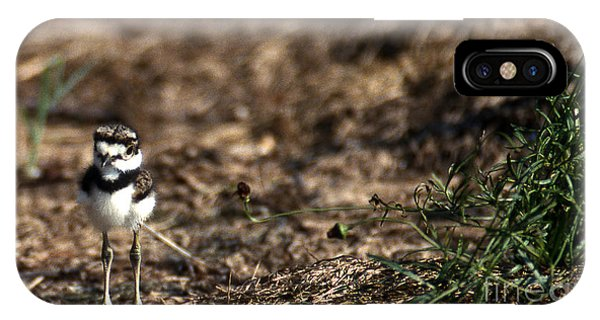 Killdeer iPhone Case - Killdeer Chick by Skip Willits