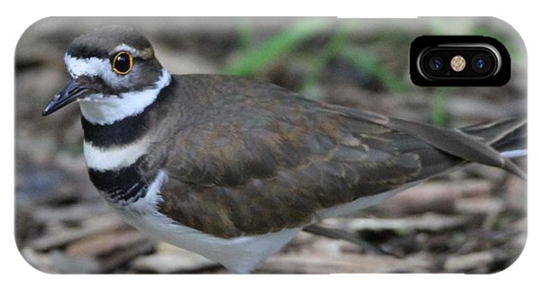 Killdeer iPhone Case - Killdeer by Dan Sproul