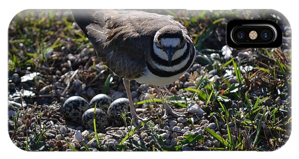 Killdeer Guarding Her Eggs IPhone Case