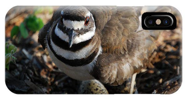 Killdeer iPhone Case - Killdeer Mom by Skip Willits