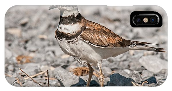 Killdeer iPhone Case - Killdeer Nesting by Lara Ellis
