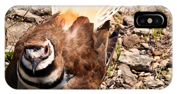 Killdeer iPhone Case - Killdeer On Its Nest by Chris Flees