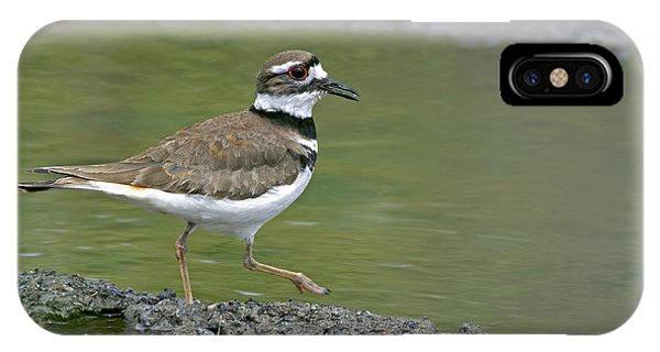 Killdeer iPhone Case - Killdeer Walking by Sharon Talson