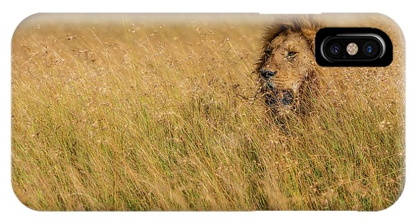 Lion iPhone Case - King by Mohammed Alnaser