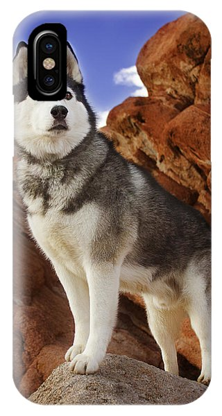 King Of The Huskies IPhone Case