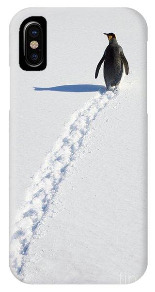 Mp iPhone Case - King Penguin And Tracks S Georgia Island by Yva Momatiuk and John Eastcott
