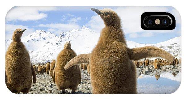 Mp iPhone Case - King Penguin Chicks South Georgia Island by Yva Momatiuk and John Eastcott