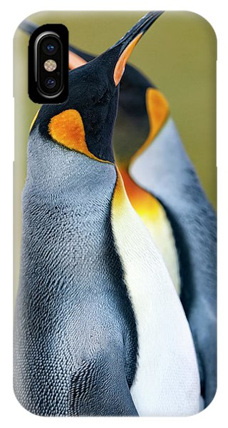 Medieval iPhone Case - King Penguin by Joan Gil Raga