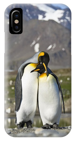 King Penguins Courting St Andrews Bay IPhone Case