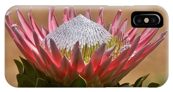 King Protea IPhone Case