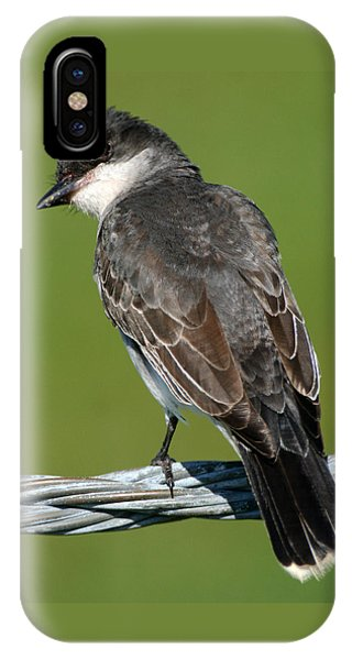 Kingbird On A Wire IPhone Case