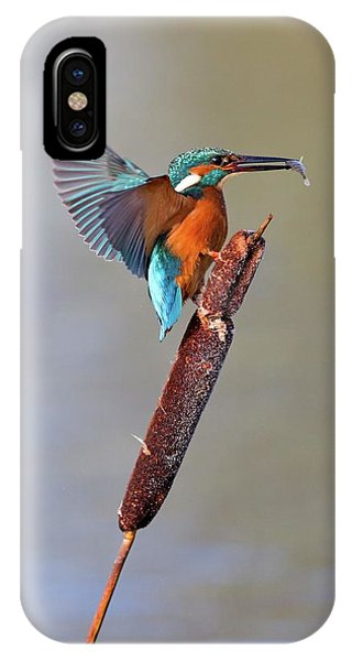 Kingfisher With Fish Phone Case by John Devries/science Photo Library