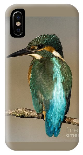 Kingfisher3 IPhone Case