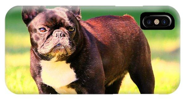 King's Frenchie - French Bulldog IPhone Case