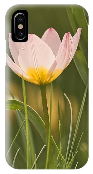 Kissed By The Morning IPhone Case
