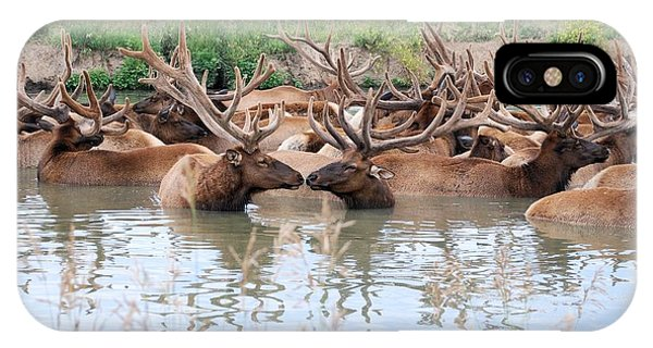 Kissing Elk IPhone Case