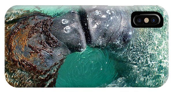 Kissing Manatees Near Harbour Island IPhone Case