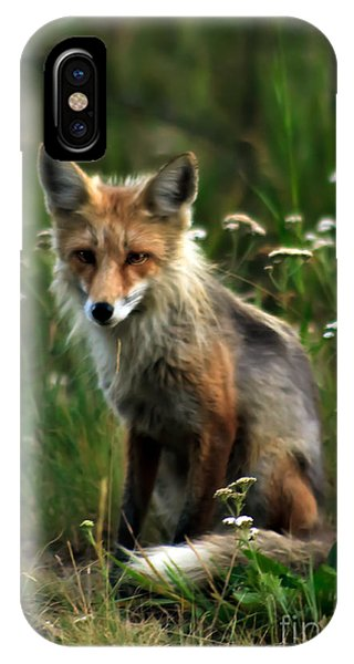Kit Red Fox IPhone Case
