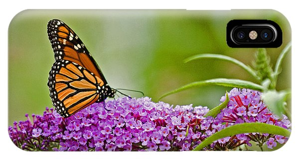 Kittatiny Monarch IPhone Case