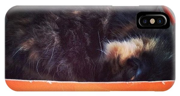 Funny iPhone Case - #kitty #cat #catinabox #silly #funny by Mandy Shupp