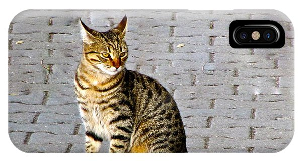Kitty In Sevastopol Russia IPhone Case