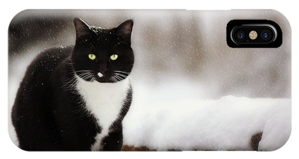Kitty Snow Play IPhone Case