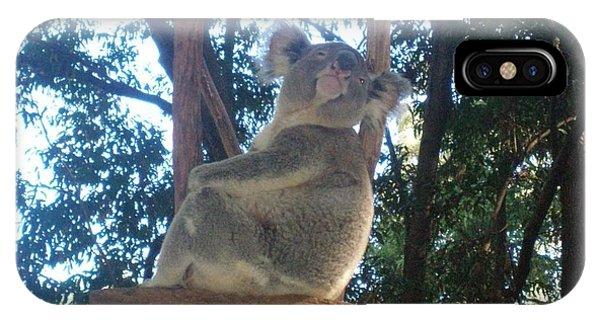 Koala Bear In Australia IPhone Case
