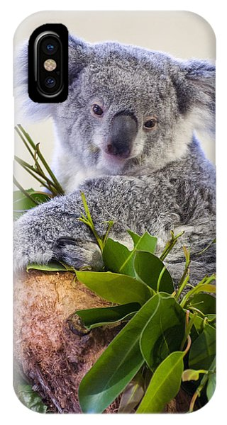 Koala On Top Of A Tree IPhone Case