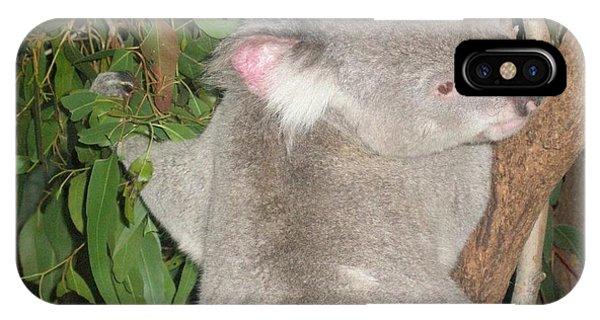 Koala In Tree IPhone Case