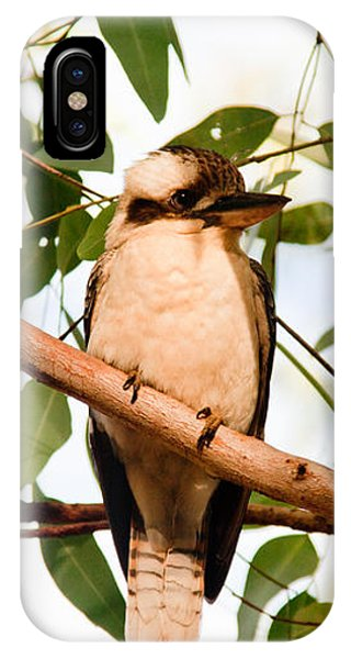 Kookaburra 2 IPhone Case