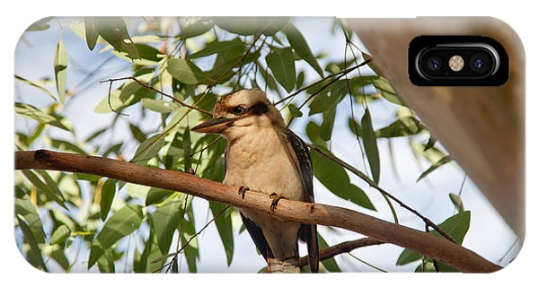 Kookaburra 3 IPhone Case