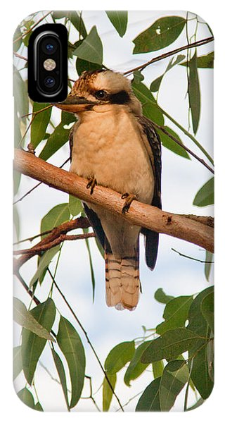 Kookaburra IPhone Case