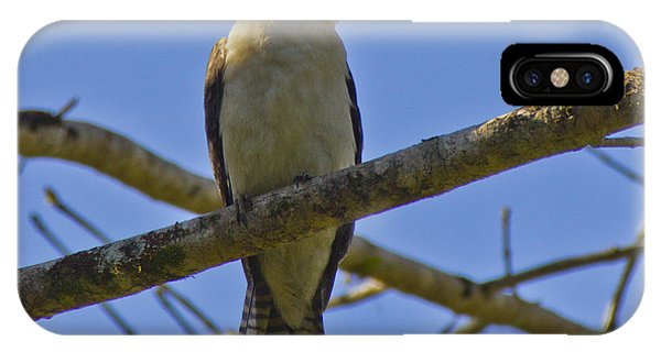 IPhone Case featuring the photograph Kookaburra by Debbie Cundy