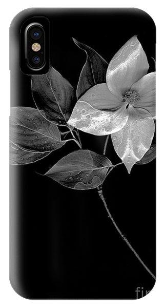 Kousa Dogwood In Black And White IPhone Case