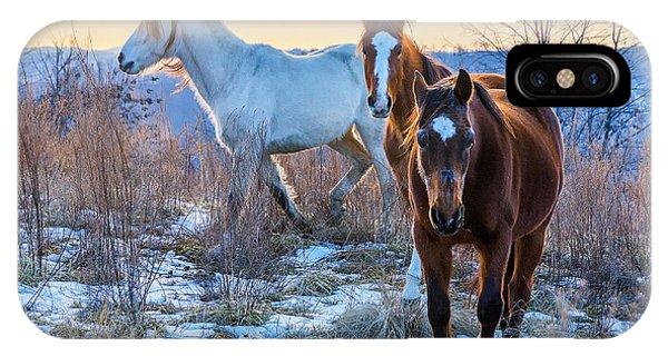 Ky Wild Horses IPhone Case