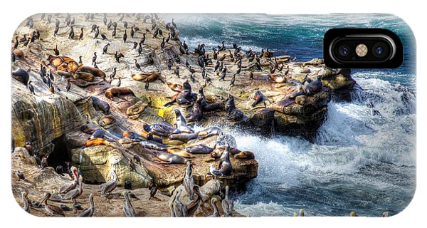 La Jolla Cove Wildlife IPhone Case