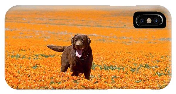 Labrador Retriever Standing Alone IPhone Case