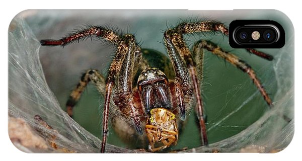 Labyrinth Spider With Prey Phone Case by Dr. John Brackenbury/science Photo Library