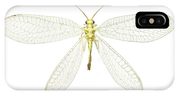Lacewing Phone Case by Natural History Museum, London