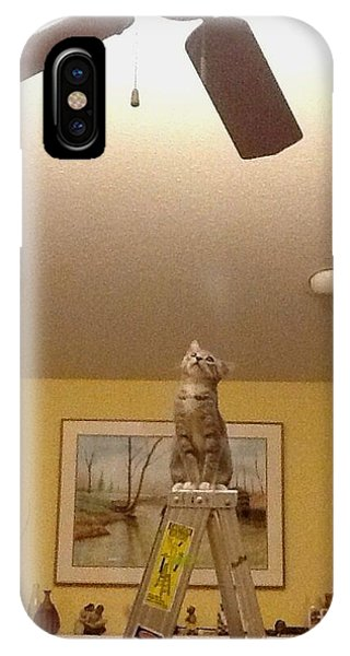 Ladder Cat IPhone Case