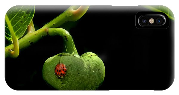 Lady Bug On Pond Apple IPhone Case