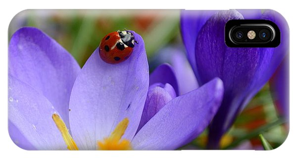 Lady Crocus IPhone Case
