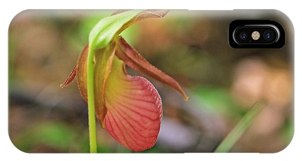 Lady Slippers At Moore State Park 4 IPhone Case
