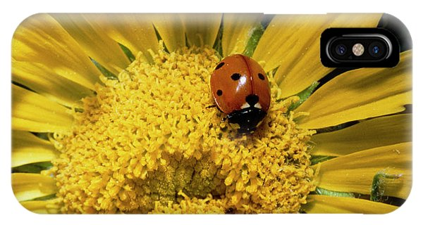 Pollination iPhone Case - Ladybird Pollinating A Sunflower by William Ervin/science Photo Library