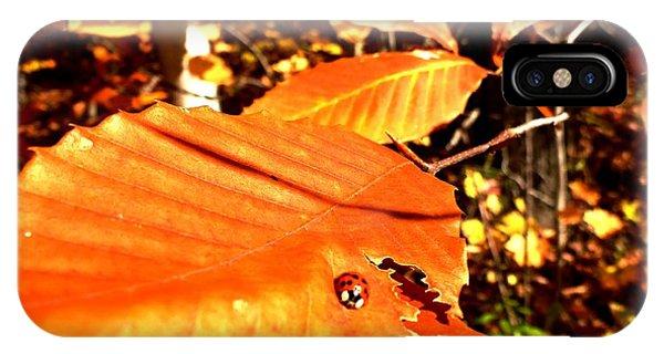 Ladybug At Fall IPhone Case