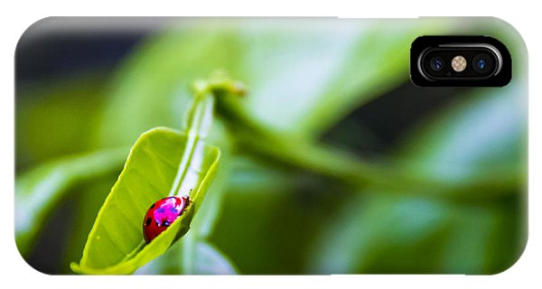 Ladybug iPhone Case - Ladybug Cup by Marvin Spates