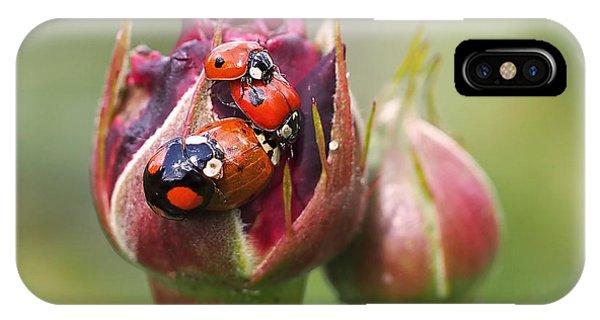 Ladybug Foursome IPhone Case